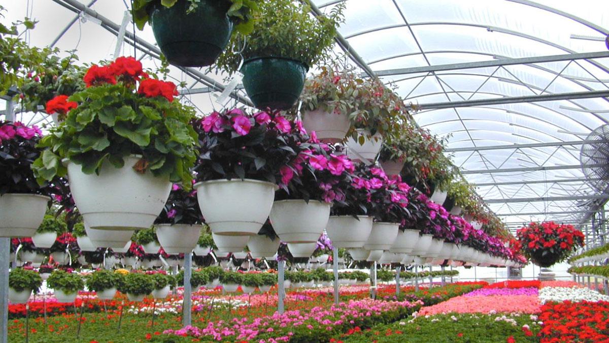 تولیدات گل و گیاه