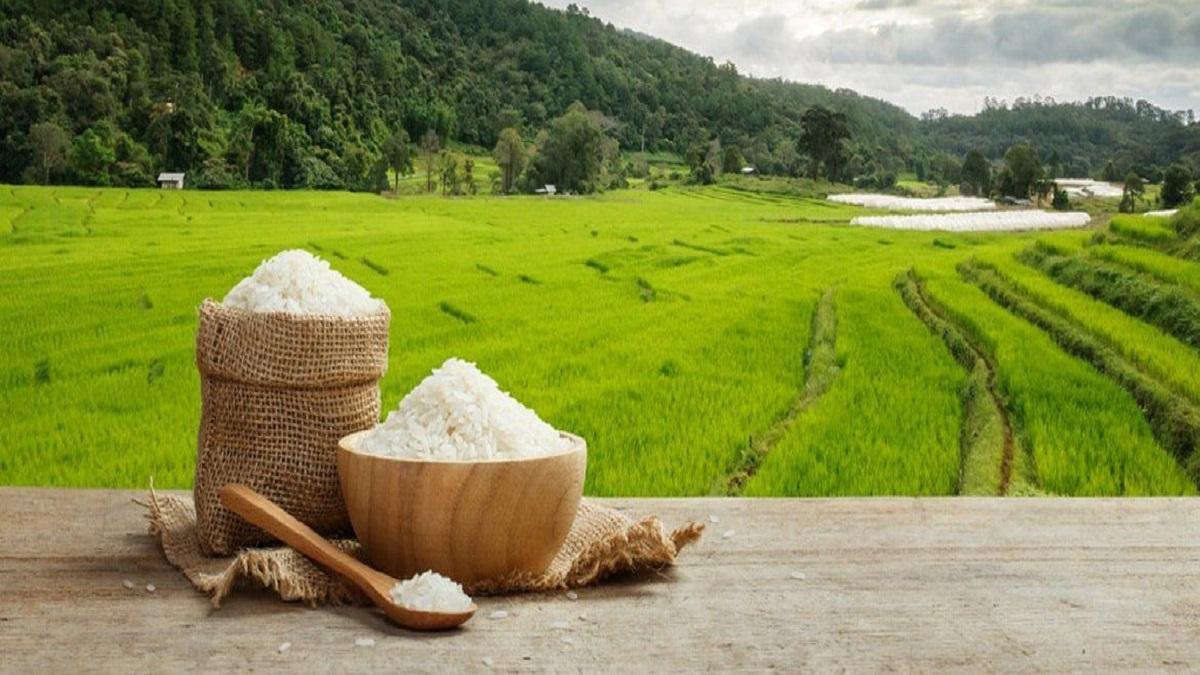 کسری واردات برنج در کشور