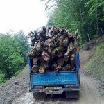 قانون مبارزه با قاچاق چوب
