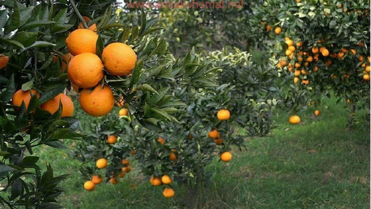 اختلاف قیمت میوه در بازار