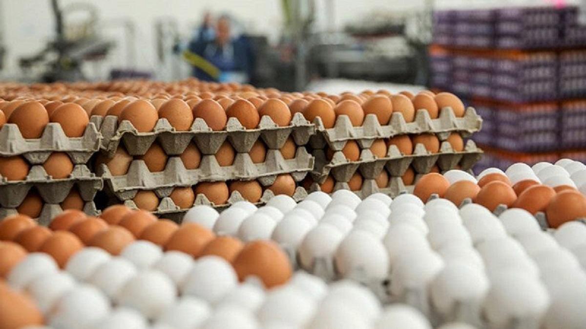 قیمت تخم مرغ در بازار