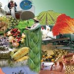 طرح تقویت امنیت غذایی