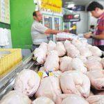 توزیع مرغ گرم در بازار